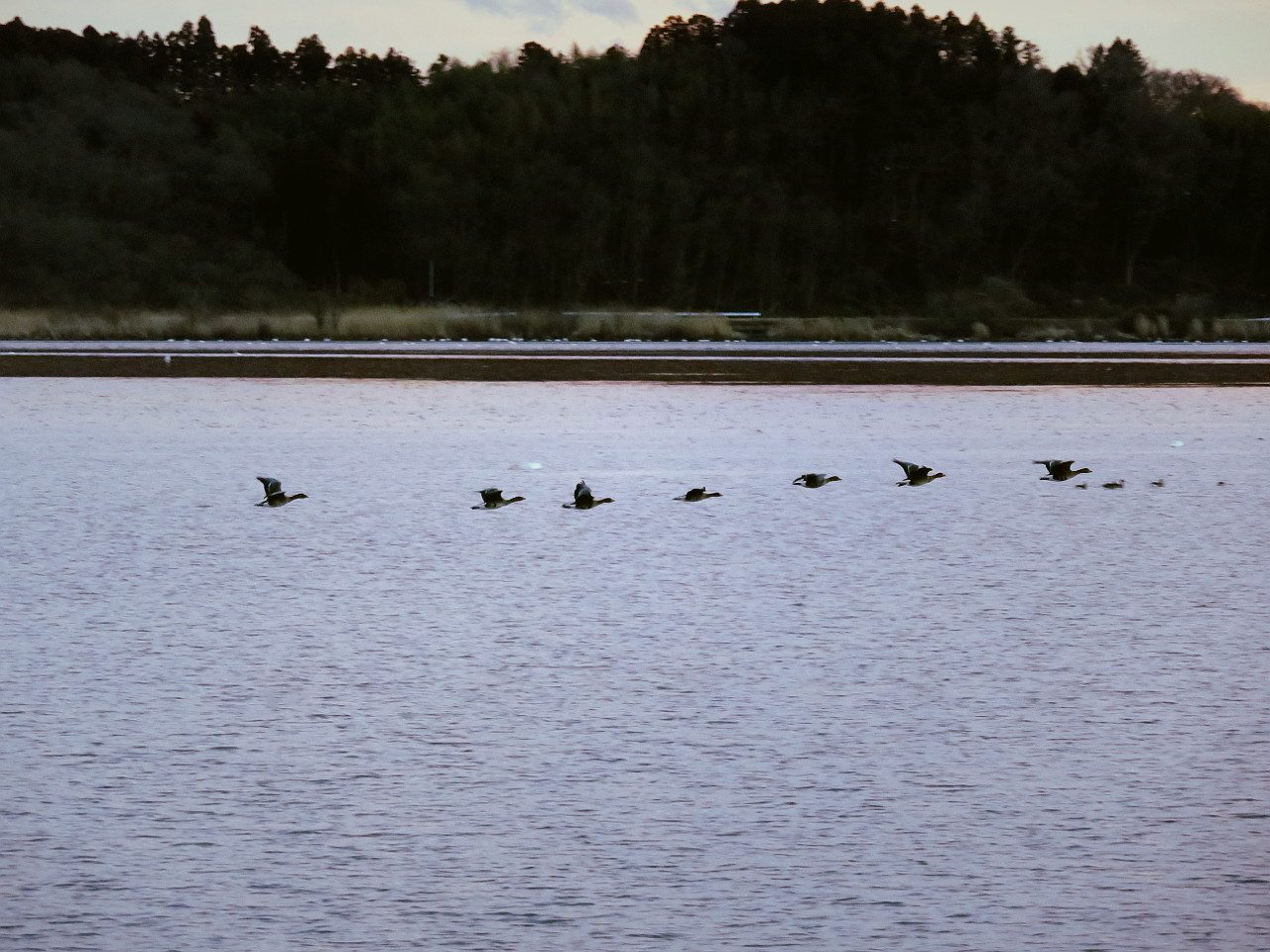 Wintering birds after take off